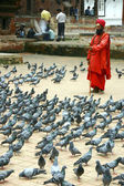 Pigeons and a monk — Stock Photo