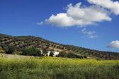 Landschaft aus grünen und gelben Feld — Stockfoto