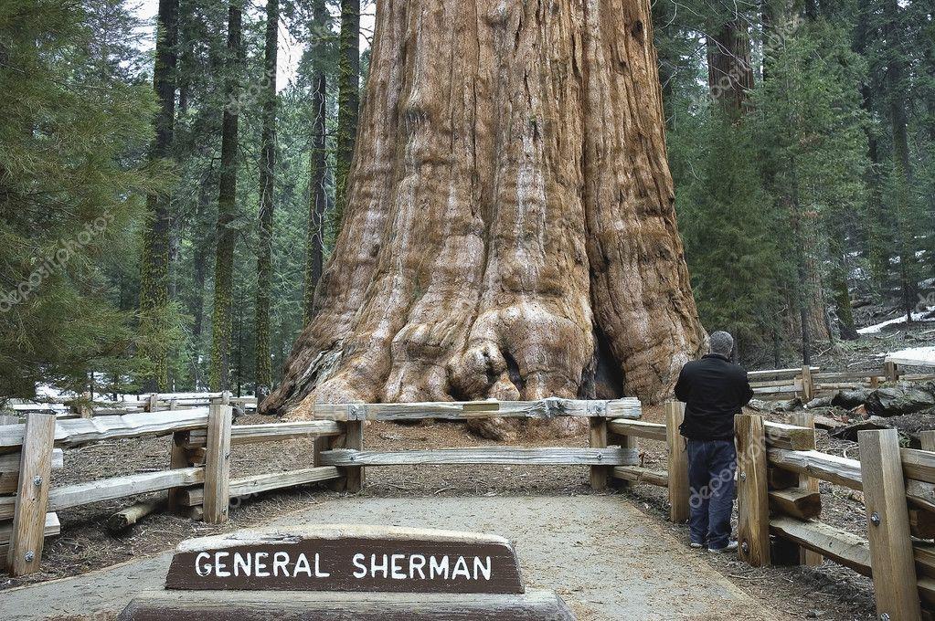 Full Hookup Near Sequoia National Park