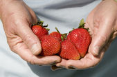 Hands full of strawberries — Stock Photo