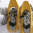 Bird - snow shoes — Stock Photo