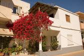 White stucco greek house with bougainvillas — Stock Photo