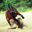 Running bay horse on sand — Stock Photo