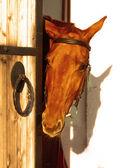 Loor cavallo rosso — Foto Stock