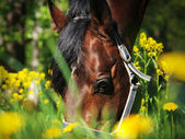Portrait bay horse in flower — Stock Photo