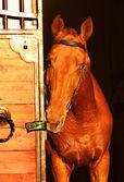 Red horse near the door on sunset — Stock Photo