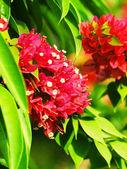 Rode mediterrane bloemen — Stockfoto