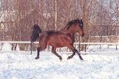 Kolejny zatoka konia w śniegu — Zdjęcie stockowe