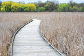 Boardwalk, Peele Island — Stock Photo