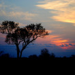 South African sun set, Kruger National Park — Stock Photo #4819501