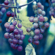 Grape bunch — Stock Photo