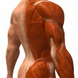 Muscle 3d illustration — Stock Photo