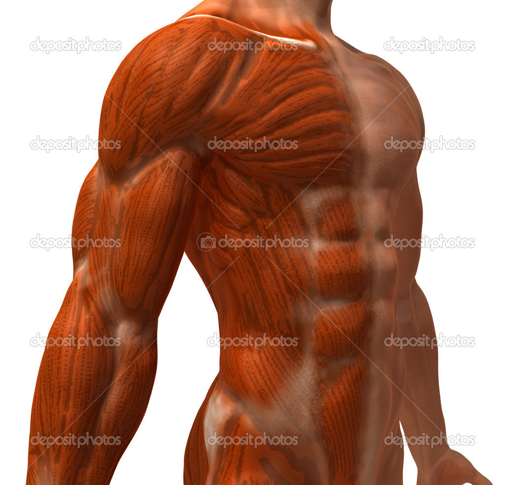 Muscle 3d illustration — Stock Photo #4393132