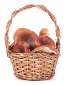 Basket with mushrooms on a white background — Stock Photo