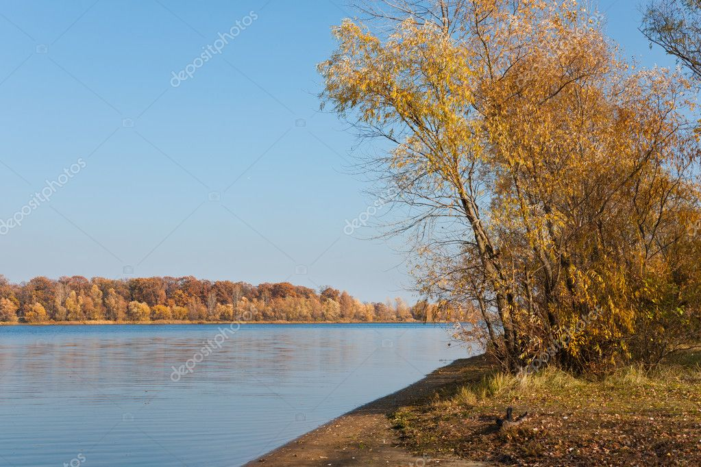 Beautiful golden autumn landscape with tree near the river — Stock Photo #4506960
