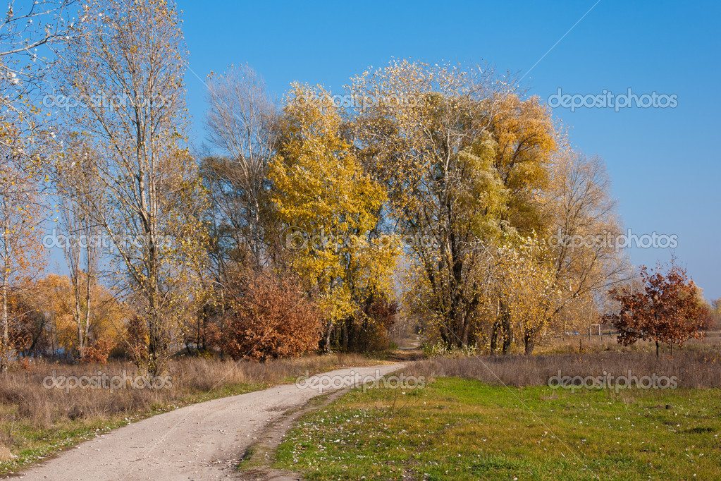 Beautiful walk through the yellow trees in the autumn park  Stock Photo #4506965