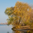 Stock Photo: Tree at the river