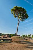 дерево на холме палатин — Стоковое фото