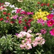 Flowerbed — Stock Photo #4422101