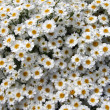 Flowerbed — Stock Photo #4432786