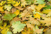 Autumnal foliage. — Stock Photo