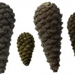 Pinecones different size and different colour. — Stock Photo
