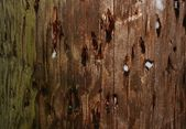 Closeup texture of wooden pole with patches of snow — Stock Photo