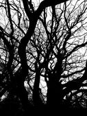 Branches — Stockfoto