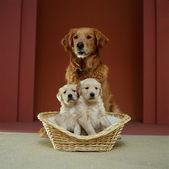 Av köpeği aile — Stok fotoğraf