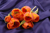 Tulip leaves — Stock Photo