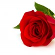 Red rose — Stock Photo #4486216