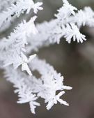 Frosty tree — Stock Photo
