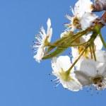 Spring flowers — Stock Photo #5328330