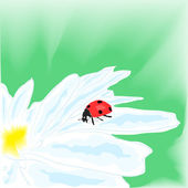 Watercolor illustration depicting a ladybug on daisy — Stock Vector