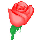 Red rose, vector illustration, eps10 — Stock Vector
