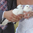 Royalty-Free Stock Photo: Pigeons in hands young