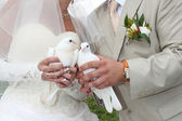Pigeons in hands young — Stock Photo
