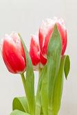 Boeket van tulpen — Stockfoto