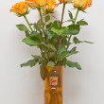 Yellow roses — Stock Photo #5150768