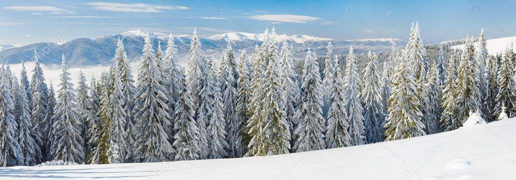 Winter calm mountain landscape with rime and snow covered spruce trees. Three shots stitch image. — Stock Photo #4412466