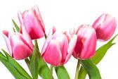 Vakantie tulpen boeket geïsoleerd op wit — Stockfoto