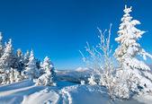 Snowy landscape — Stock Photo