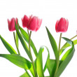 Royalty-Free Stock Photo: Holiday tulips bouquet isolated on white