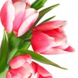 Holiday tulips bouquet isolated on white — Stock Photo