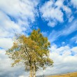 Royalty-Free Stock Photo: Lonely autumn tree on sky background.