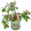 Jade plant with dollar bills isolated on white — Стоковая фотография