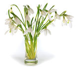 Snowdrop flowers nosegay isolated on white — Stock Photo