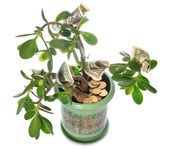 Jade plant with dollar bills isolated on white — Stock Photo