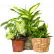 Group of window plant - Foto Stock
