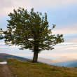 Lonely tree in autumn mountain — Stock Photo
